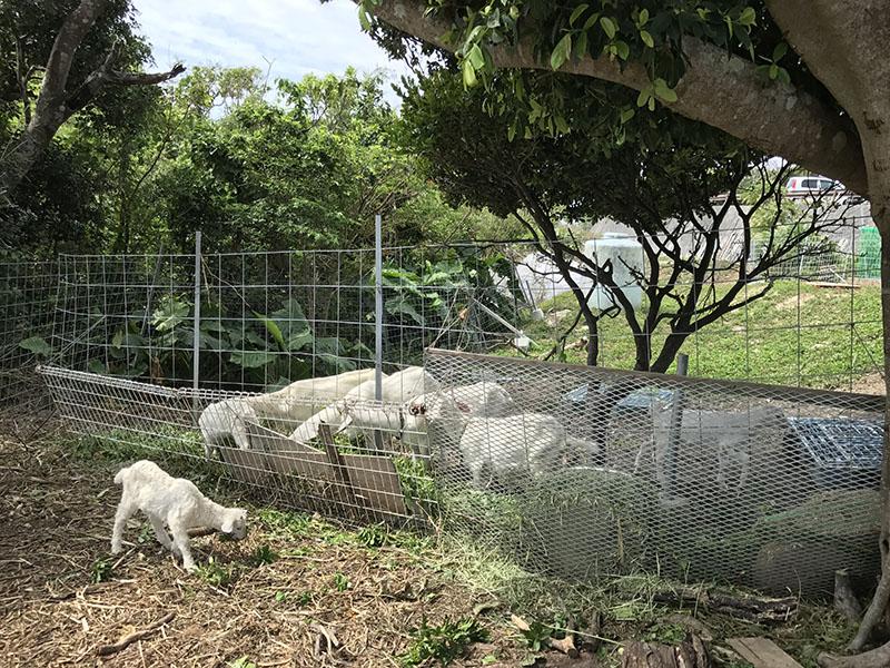 ヤギの飼育スペース